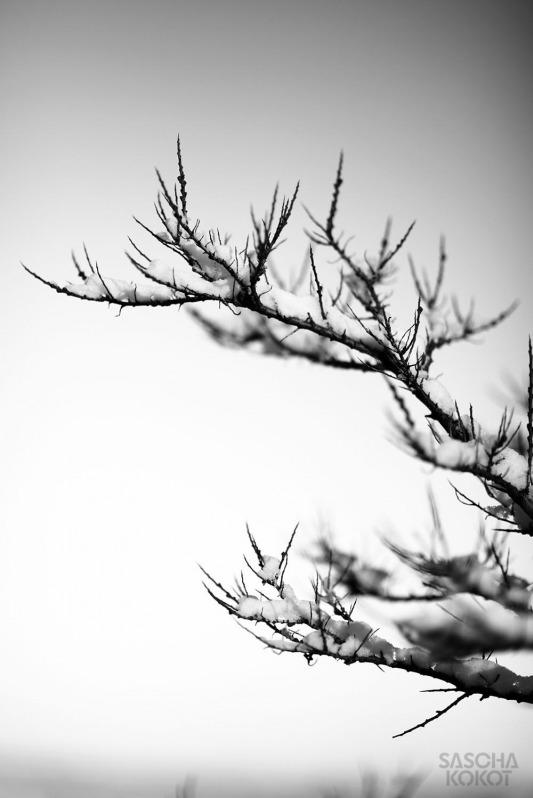 02-hiddensee.2o14-049s-fb-saschakokot